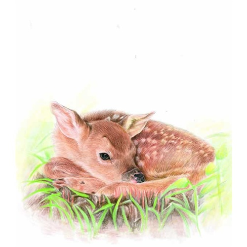 动物绘2 (最细致,最可爱的动物