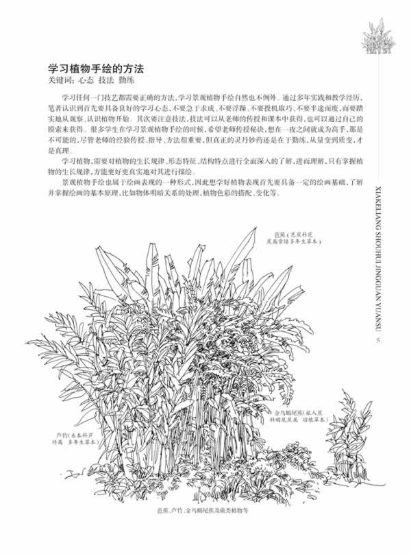 园林手绘表现图中最基本的构成元素