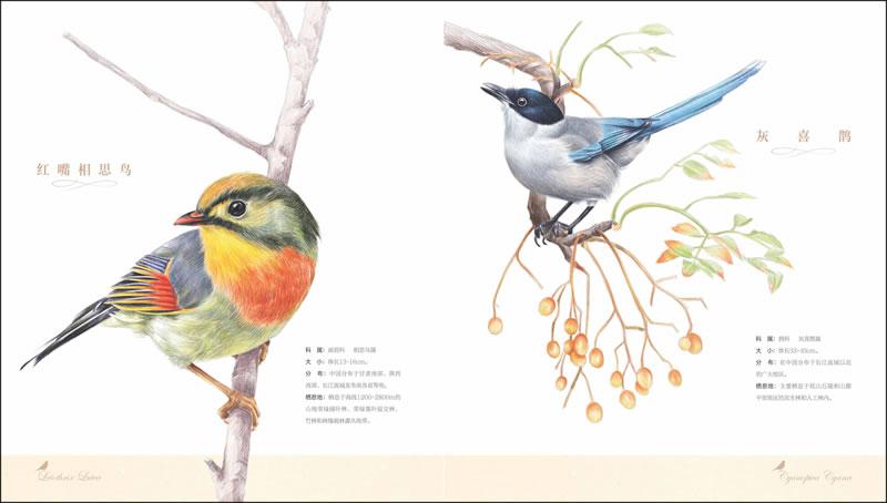 玄凤表情手绘图片展示动态包带鹦鹉赵丽颖图片字图片