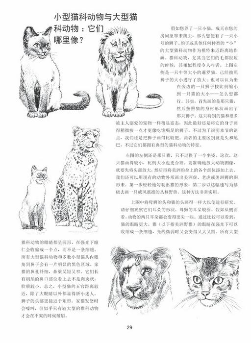 世界绘画经典教程——动物素描(修订版)