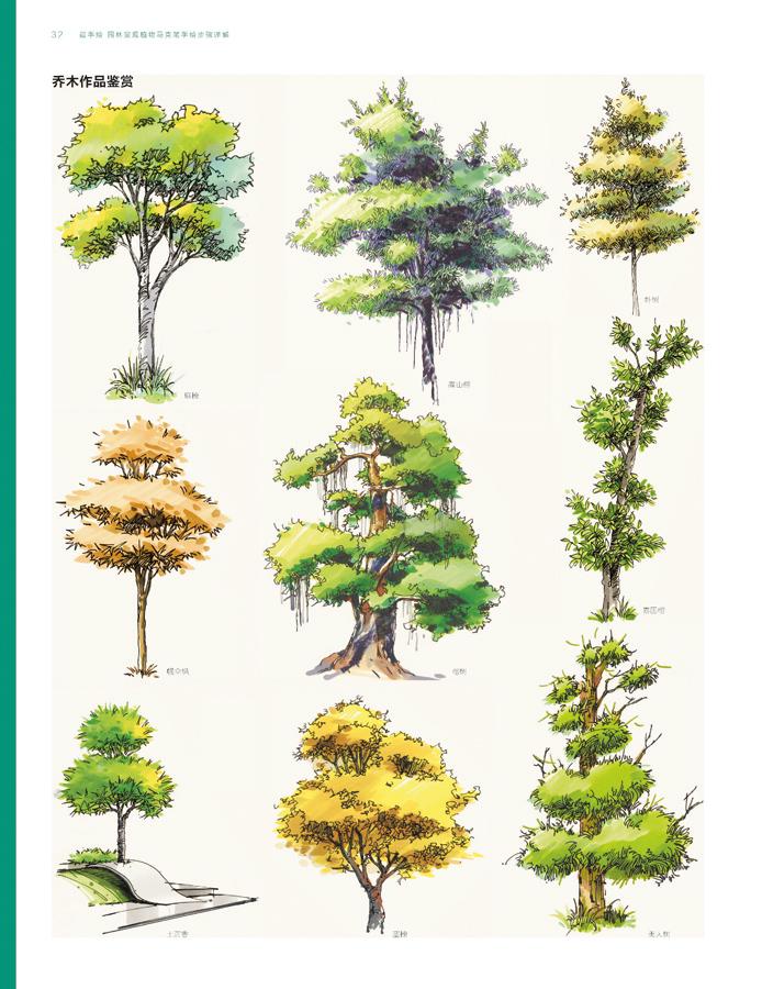 植物表现是园林景观手绘中最重要的内容,同样也是初学者最不容易掌握的部分。读者应先从线条和马克笔的表现技法入手,运用凹凸线、短线、云朵线等技法反复练习绘制不同的植物。 通过对植物绘制技巧的分析讲解,使读者在短时间内熟悉、了解各种植物绘制技法的表现规律,迅速获得植物绘制技法的基础知识,然后读者可以根据园林景观植物的五大分类,尝试用马克笔进行着色,进一步掌握植物绘制的色彩要求。练习前要先了解马克笔的性能及使用方法,以便更好地把握手绘的含义。 掌握了五类园林景观植物的绘制技法后,便可绘制园林景观手绘效果图了,选择