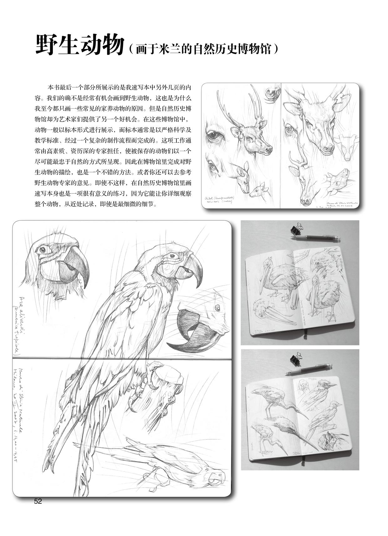 《动物素描表现技法---意大利经典素描训练教程-w