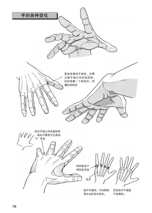 日本漫画手绘技法经典教程2:人物身体的画法-云仓