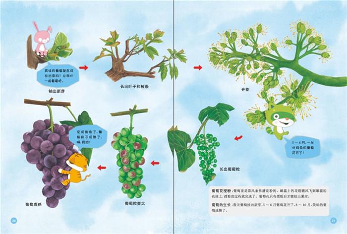 动植物简笔画