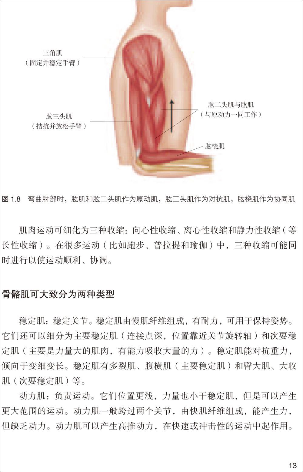 左手小指解剖学骨骼结构图