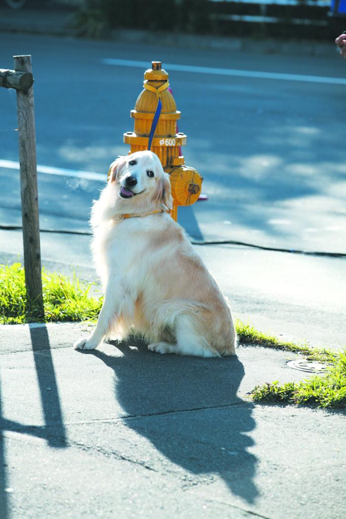 动物 狗 狗狗 700