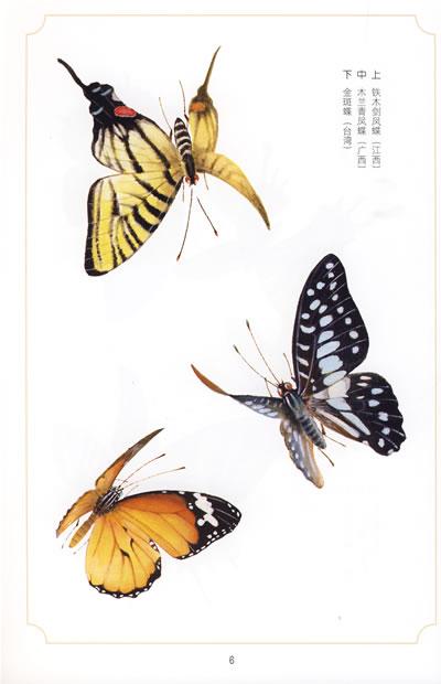 昆虫图谱工笔画蝴蝶-昆虫图谱