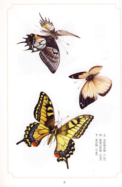 国画蝴蝶工笔画蝴蝶-序言 中华彩蝶图谱