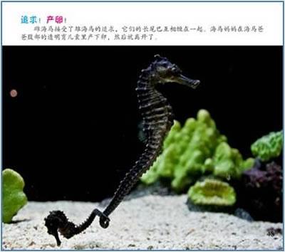 鱼是便问动物,也叫冷血动物,它们的体温会随着外界温度的变化而变化.