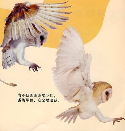 《看小动物成长6:小猫头鹰》英国dk公司