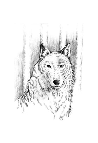中国动物文学大系·独狼
