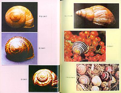 蜗牛的身体结构手绘图