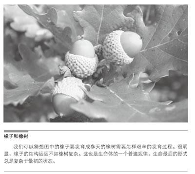 橡子里的幼体比起橡胶树简单许多