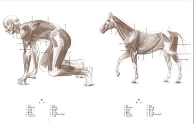 解剖绘画学校 动物