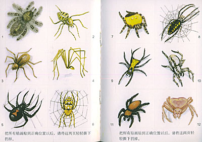 蜘蛛设计元素矢量图