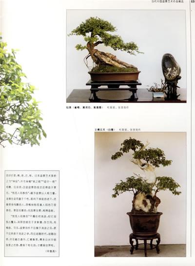 制作树木盆景的基本方法