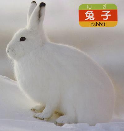 【智宝宝泡泡书:小动物】智宝宝泡泡书:小动物