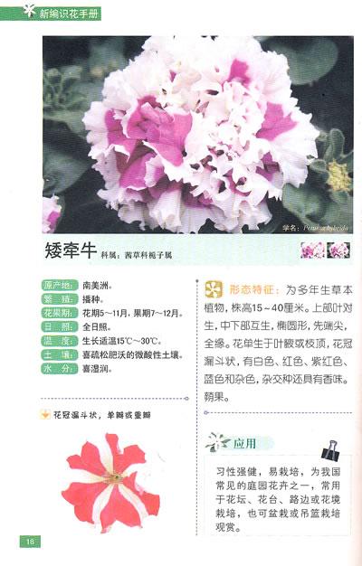 木本花卉手绘插画图片