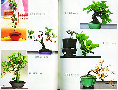 果树盆景制作与养护【保证正版】