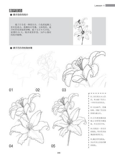 康乃馨手绘铅笔画步骤