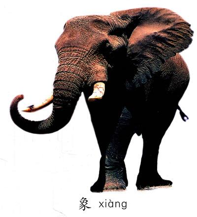 大象 动物 400_439