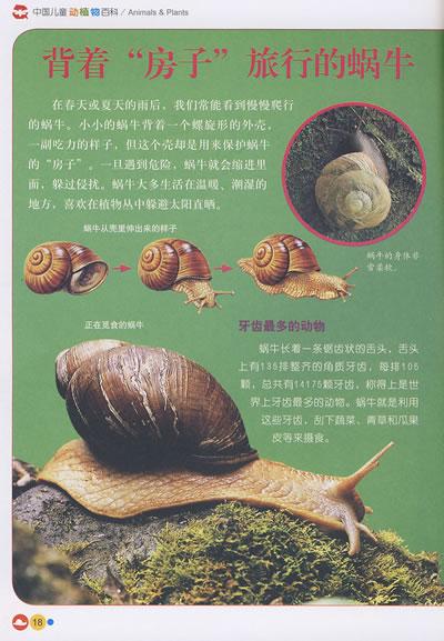 无脊椎动物:中国儿童动植物百科