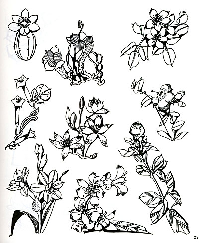 植物素描夸张素材