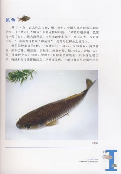 观察淡水鱼(彩版)(我爱自然丛书)