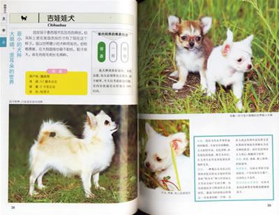 特价图书_宠物喂养与训练--小动物(彩色图鉴) (日)中泽秀章 ,刘文丽